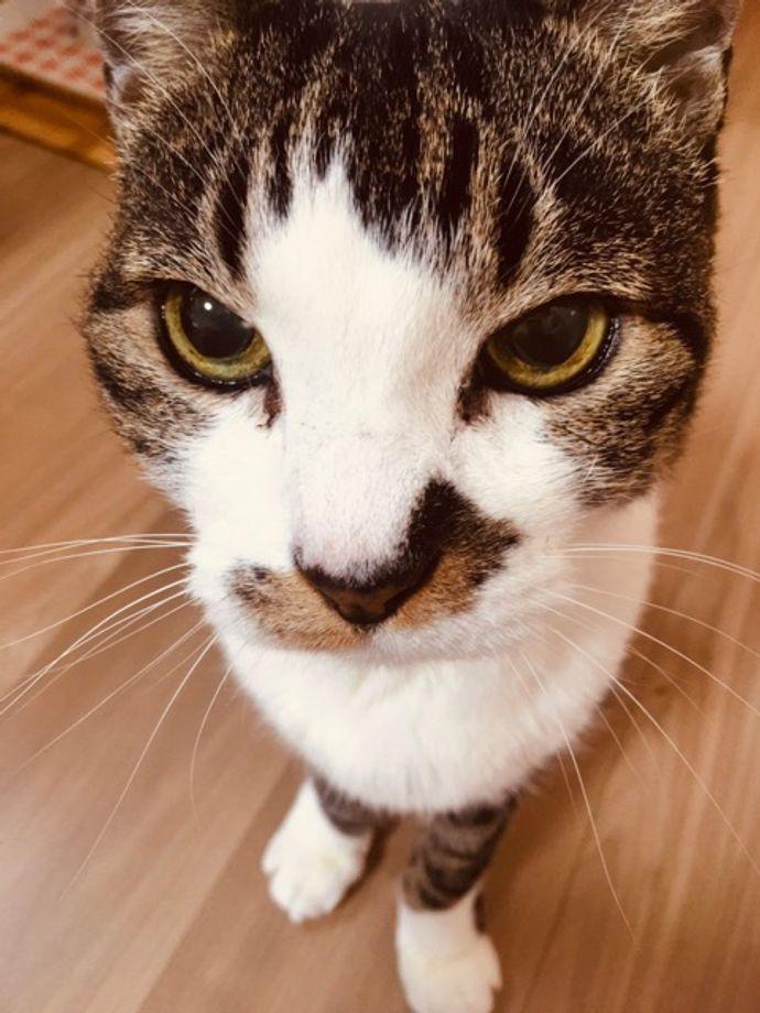 natsumeさんのプロフィール画像